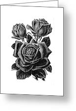 Rose Black Greeting Card