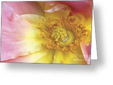 Rose Bloom Greeting Card