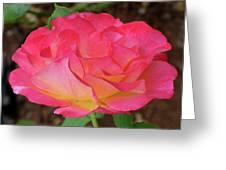 Rose Blushing Greeting Card
