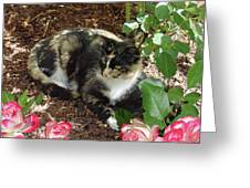 Rose Bower For A Cat Greeting Card