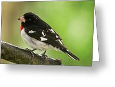 Rose-breasted Grosbeak Male Perched New Jersey  Greeting Card