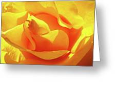 Rose Bright Orange Sunny Rose Flower Floral Baslee Troutman Greeting Card