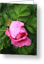 Rose Bud And Bee Greeting Card
