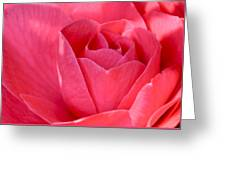 Rose Camellia Greeting Card
