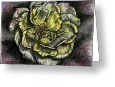 Rose Cream Greeting Card