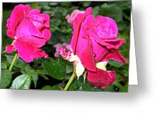 Rose Duo Greeting Card