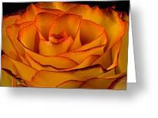 Rose Edge  Greeting Card