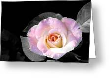 Rose Emergance Greeting Card