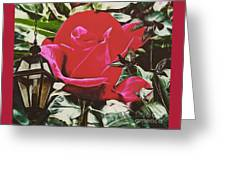 Rose Evening,oil Greeting Card