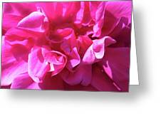 Rose Explosion Greeting Card
