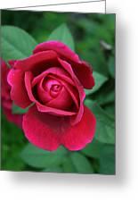 Rose Eye Greeting Card