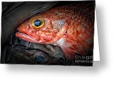 Rose Fish Greeting Card
