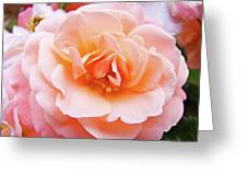 Rose Floral Art Print Peach Pink Roses Garden Canvas Baslee Troutman Greeting Card