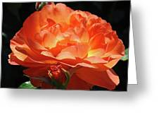 Rose Flower Art Prints Oragne Roses Summer Botanical Baslee Troutman Greeting Card
