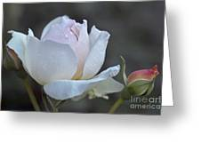 Rose Flower Series 14 Greeting Card