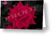 Rose Flower Greeting Card