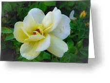 Rose From Home Greeting Card