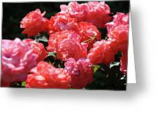 Rose Garden Art Prints Pink Red Rose Flowers Baslee Troutman Greeting Card