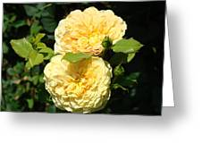 Rose Garden Floral Art Print Yellow Roses Canvas Baslee Troutman Greeting Card