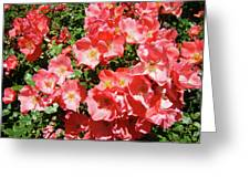Rose Garden Pink Roses Botanical Landscape Baslee Troutman Greeting Card