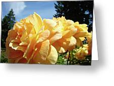 Rose Garden Yellow Peach Orange Roses Flowers 3 Botanical Art Baslee Troutman Greeting Card