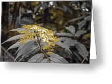 Rose Gold Greeting Card