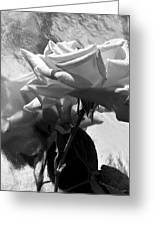Rose Gray Tones Greeting Card