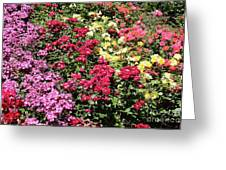Rose Hill Greeting Card