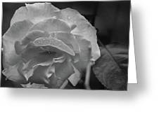 Rose In Black And White Greeting Card by Kelly Hazel