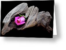 Rose In Driftwood 2 Greeting Card