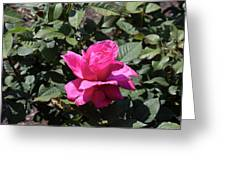 Rose In Flower Bed Greeting Card