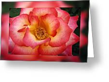 Rose In Reflection Greeting Card