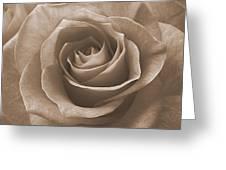 Rose In Sepia Greeting Card