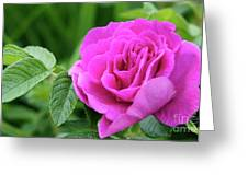 Rose In The Afternoon Greeting Card