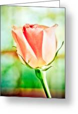 Rose In Window Greeting Card