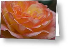 Rose In Yellow And Pink I Greeting Card