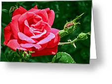 Rose Is Its Name Greeting Card