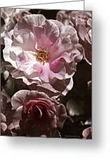 Rose Kiss Greeting Card