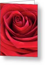 Rose Macro Greeting Card