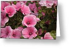 Rose Mallow Flowers Greeting Card