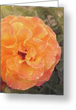 Rose Of Seville Greeting Card
