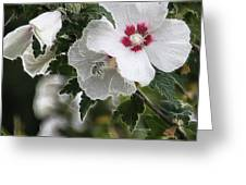 Rose Of Sharon And Bee Greeting Card