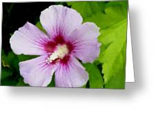 Rose Of Sharon Close Up Greeting Card