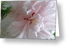 Rose Of Sharon In The Rain Greeting Card