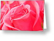 Rose Petals - 1 Greeting Card