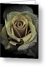 Rose Petals Greeting Card