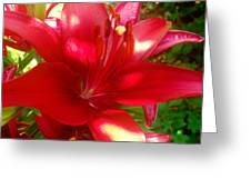 Rose Pink Lily Greeting Card