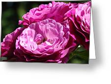 Rose Pink Purple Roses Flowers 1 Rose Garden Sunlit Flowers Baslee Troutman Greeting Card