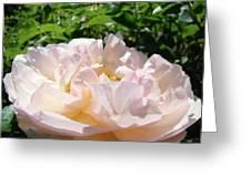 Rose Pink Sunlit Rose Flower Art Prints Baslee Troutman Greeting Card