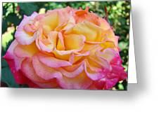 Rose Pink Yellow Rose Flower 2 Rose Garden Giclee Prints Baslee Troutman Greeting Card